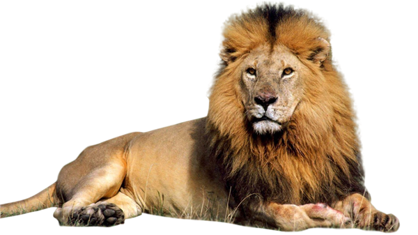 Lion Regal